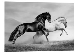 Acrylic print  Horses black and white