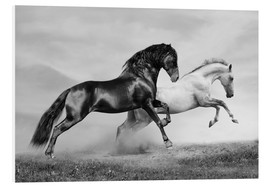 Foam board print  Horses black and white