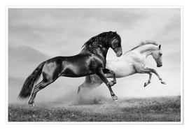 Premium poster  Horses black and white