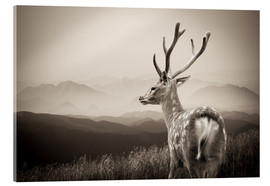 Acrylic print  Stag in the Mountains