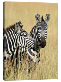 Canvas print  Zebra friendship