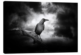 Canvas print  Raven in the moonlight