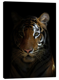 Canvas print  Bengal tiger in the dark night