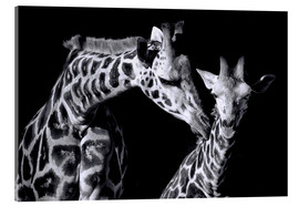 Acrylic print  Mother and child giraffe - Sabine Wagner
