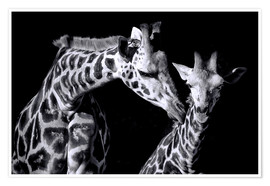 Premium poster  Mother and child giraffe - Sabine Wagner