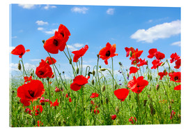 Acrylic print  Red poppies in green field