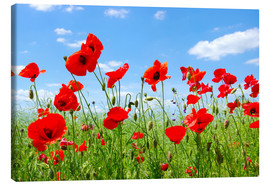 Canvas print  Red poppies in green field