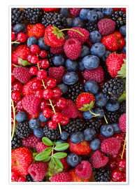 Premium poster  Colorful berries