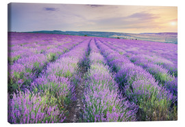 Canvas print  Lavender Meadow at sunset