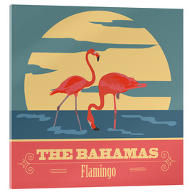 Acrylic print  The Bahamas - Flamingo
