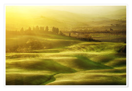 Premium poster Wavy fields in Tuscany, Italy