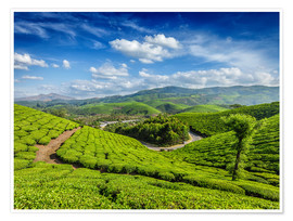 Premium poster  Green tea plantations in morning