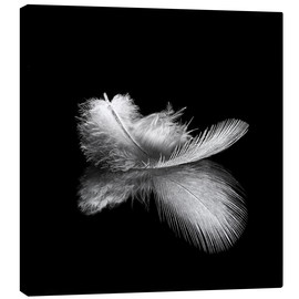 Canvas print  Light as a feather
