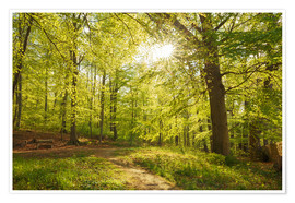 Premium poster Spring forest with sunshine