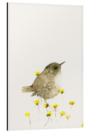 Aluminium print  Wren amongst yellow flowers - Dearpumpernickel