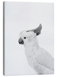 Canvas print  Feathered rebel - Finlay and Noa