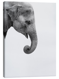 Canvas print  Gray giant - Finlay and Noa