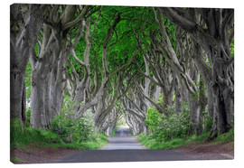 Canvas print  Dark Hedges in Ireland - Dieter Meyrl