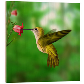 Wood print  Hummingbird drinking nectar from flower