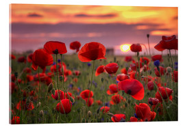 Acrylic print  Poppies in sunset - Steffen Gierok