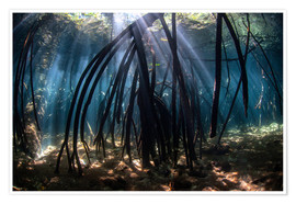 Premium poster  Beams of sunlight in a mangrove forest - Ethan Daniels