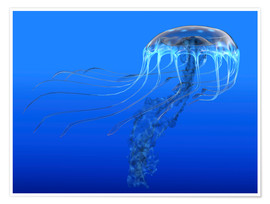 Premium poster  A blue spotted jellyfish illustration. - Corey Ford