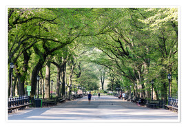 Premium poster  The Mall in spring, Central park, New York city, USA - Matteo Colombo