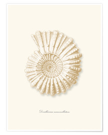 Premium poster  Amonite spiral - Patruschka