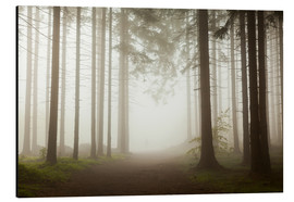Aluminium print  Magic Forest - Fog - Mikolaj Gospodarek