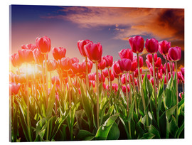 Acrylic print  Tulip field in the evening light