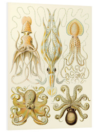 Foam board print  Squid and octopi - Ernst Haeckel