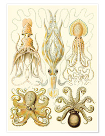 Premium poster  Squid and octopi - Ernst Haeckel