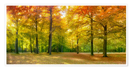 Premium poster Autumn Forest Panorama in sunlight