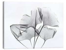 Canvas print  Ginkgo plant leaves