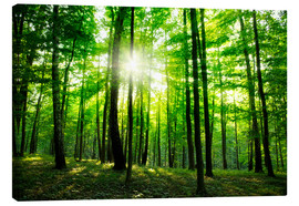 Canvas print  Sunlight in the green forest, spring time