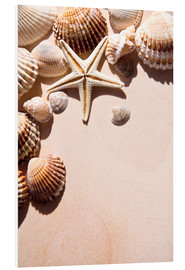 Foam board print  Starfish and shells