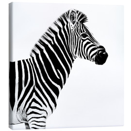Canvas print  Zebra on white - Philippe HUGONNARD