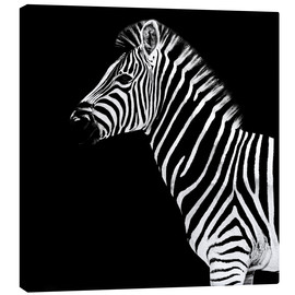 Canvas print  Zebra on black - Philippe HUGONNARD