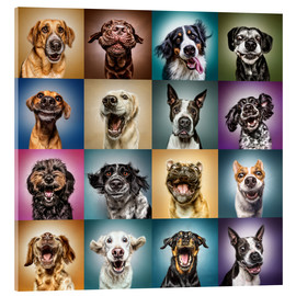 Acrylic print  Funny dog faces - Manuela Kulpa
