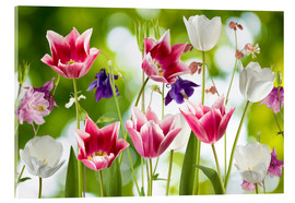 Acrylic print  Tulips and columbine flowers