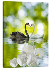 Canvas print  Two swans in love