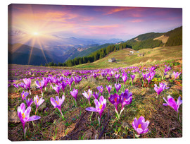 Canvas print  Crocuses in the spring sun