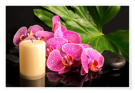 Premium poster  Zen still life with orchids