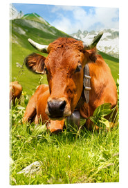 Acrylic print  Cow with bell on Mountain Pasture