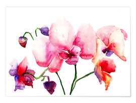 Premium poster  Pink orchids