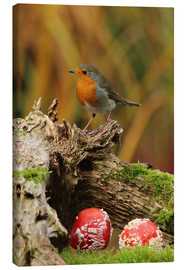 Canvas print  Robin in the fairy forest - Uwe Fuchs