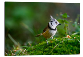 Aluminium print  Cute tit standing on the forest ground - Peter Wey