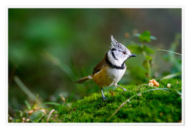 Premium poster  Cute tit standing on the forest ground - Peter Wey