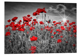 Foam board print  Idyllic field of poppies - Melanie Viola