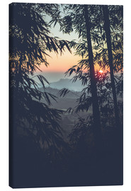 Canvas print  Bamboo in the sunset